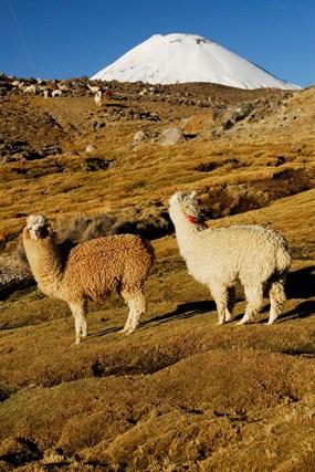 Bofedal de Parinacota